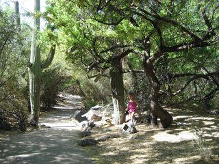 Scarlet_trees